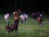 Naši koně