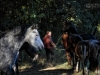 Život s koňmi